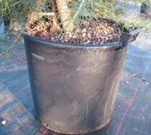 Conteneur plastique pour arbre