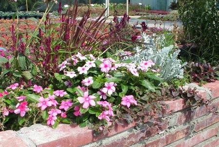 jardiniere de fleurs plein soleil awesome tous les lins aiment les sols drainants mme pauvres. Black Bedroom Furniture Sets. Home Design Ideas